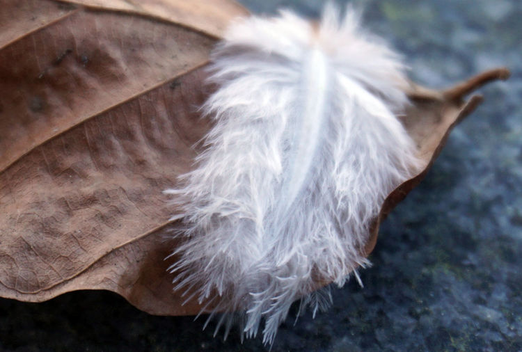 High angle view of feather