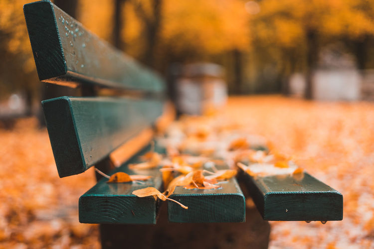 Close-up of leaves on bench during autumn