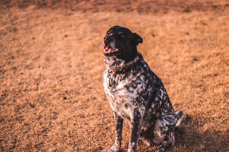Dog One Animal Pets Mammal Animal Themes Domestic Animals Day Outdoors Nature