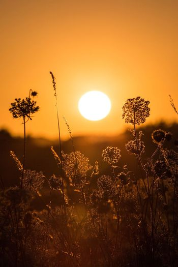 EyeEm Selects Sunset Sunset_collection Sunset Silhouettes Sun Beauty In Nature Tree Orange Color Nature Scenics Tranquil Scene Growth Field Outdoors No People Idyllic Sunlight Sky Tranquility Silhouette Landscape Moon Grass