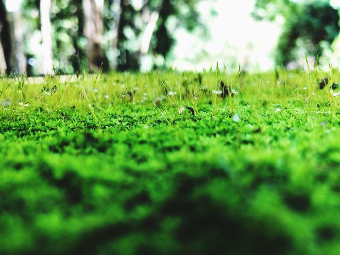 Green Moss Moss