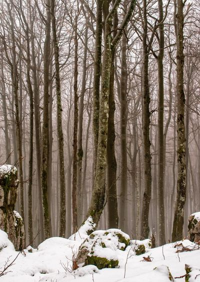 Tree lines. Tree Snow Cold Temperature Winter Forest Sky WoodLand Snow Covered Weather Condition Cold