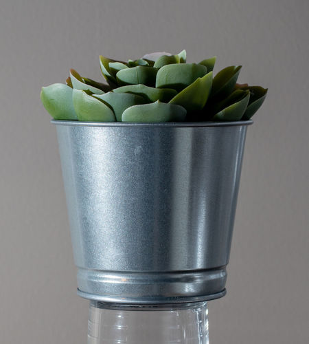 Close-up of succulent plant against white background