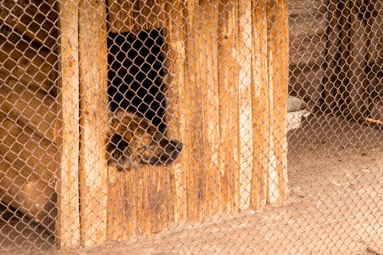 View of an animal through metal fence