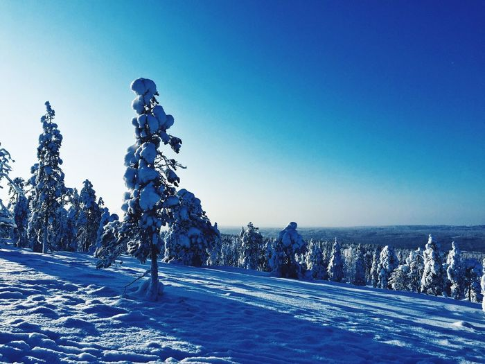 Cold Temperature Snow Winter Blue Nature Outdoors Clear Sky Beauty In Nature Scenics Tree Tranquility Tranquil Scene Frozen Day No People Landscape Sky