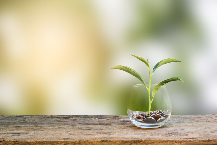 Investment concept. Growth plant on coins in clear glass bottle on wooden table with green blurred background and light. Conceptual saving money for growing business and future Business Currency Growing Growth Investing in Quality of Life Background Bank Banking Cash Coin Concept Earnings Economic Finance Financial Green Color Growth Ideas Investment Money No People Plant Saving Table Wood - Material