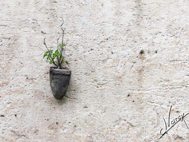 JVarq Plantas Fondos Pared Guanajuato