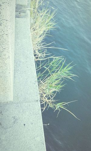 Grass River Embankment Water Clinging To Life Plants 🌱 On The Edge