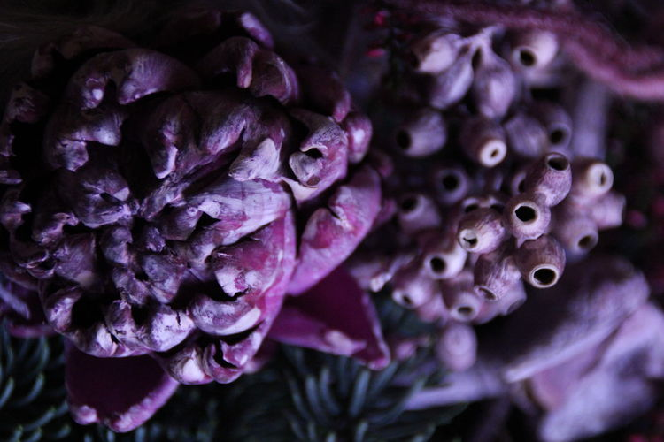Close-up of purple vegetable