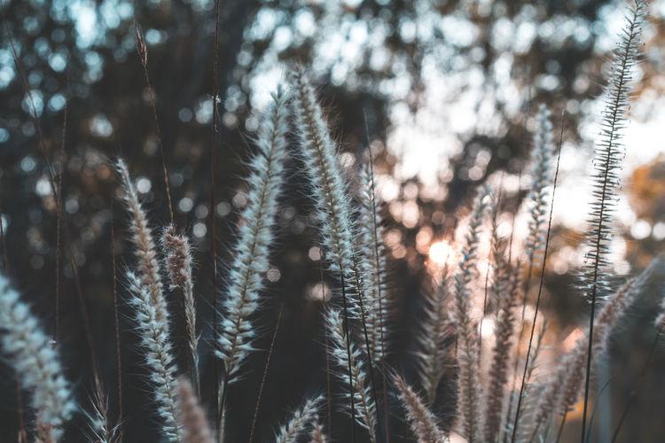 Close-up of stalks in sunlight