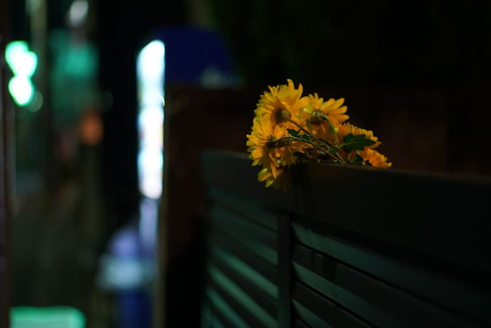 EyeEmNewHere Architecture Barrier Beauty In Nature Boundary Close-up Fkower Flower Flower Arrangement Flower Head Flowering Plant Focus On Foreground Fragility Freshness Nature Night No People Outdoors Plant Selective Focus Streetphotography Strreet Vulnerability  Wood - Material Yellow