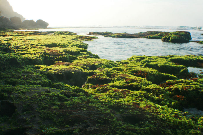 foreshore Beauty In Nature Coral Day Foreshore Green Color Growth Moss Nature No People Outdoors Plant Reef Rock Scenics Sea Seashore Water Water Plants