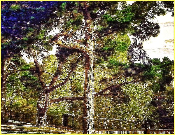 Trees Fun With Editing :)