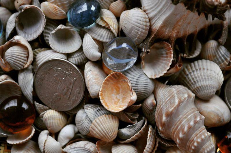 Ракушки, монеты