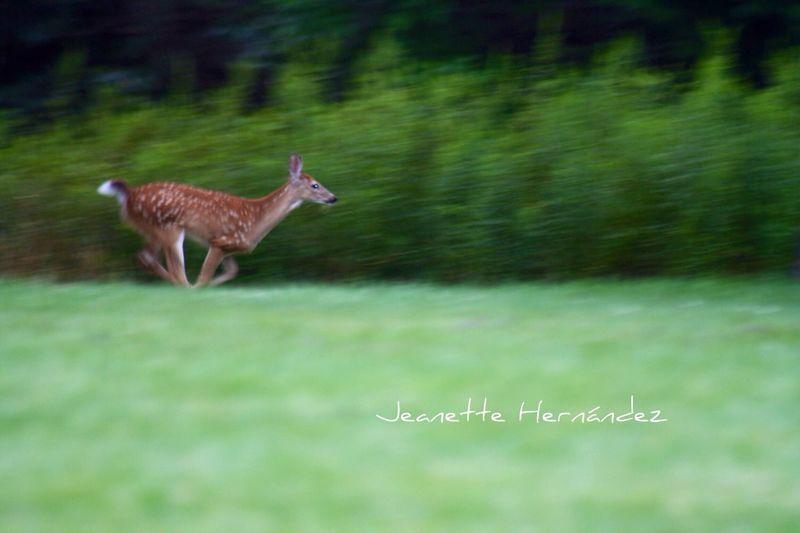Runnnnnn Forrest Run Deer Streamzoofamily StreamzooPics Nature