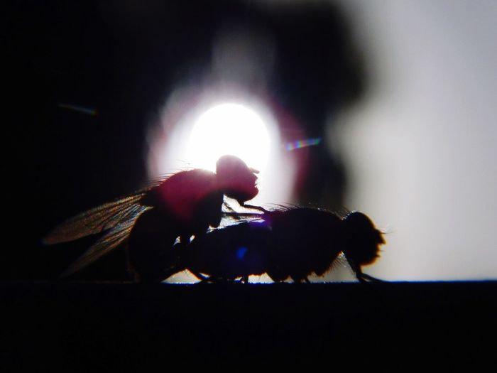 Bees in the moment Bee Silhouette Animals In The Wild Close-up Sun Nature Nature