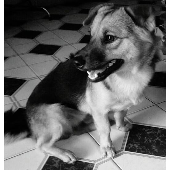 Mydog♡ His Eyes Look So Far Black And White Color