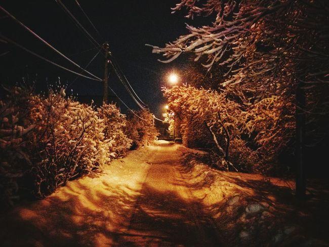 Night Tree Outdoors Snow