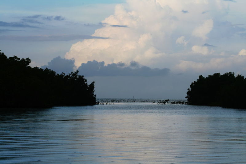 2010 Beauty In Nature Cayo Largo Cloud - Sky Cuba Day Mangroves Nature No People Outdoors Scenics Sea Sky Water Waterfront
