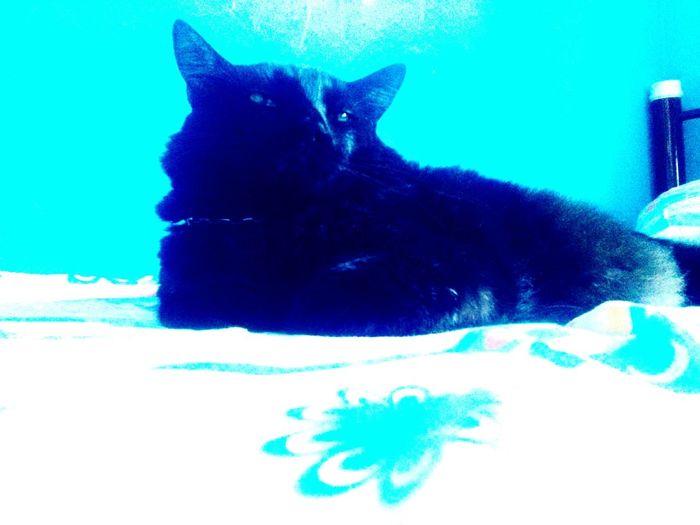Diz a lenda que traz mà sorte, mas diz a minha lenda, que ele a afasta! Nego Cat♡ Lovemycat