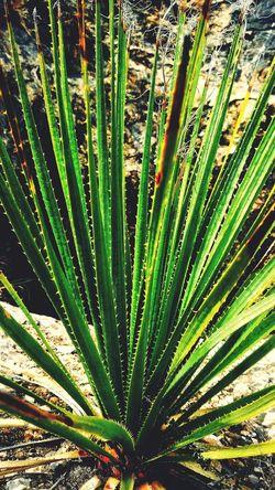 Nature Green Color No People Plant Beauty In Nature Saltillo Coahuila Mexico Nort