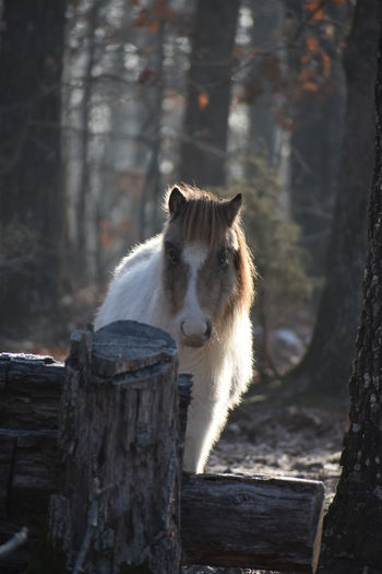 View of a tree trunk and horse
