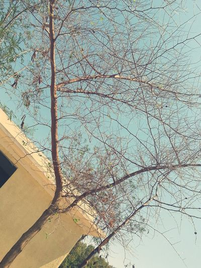 اذا تساوى الأخضر بالـ الصفر فأنت على حافة الحزن 😶✋ Green Equal Life Nature Massage From Nature No People Tree My Photography My Photos Eyem Gallery Simple Photography Don't Give Up EyeEmBestPics EyeEm Best Shots تصويري  P9 Huawei Photo By Me Egypt