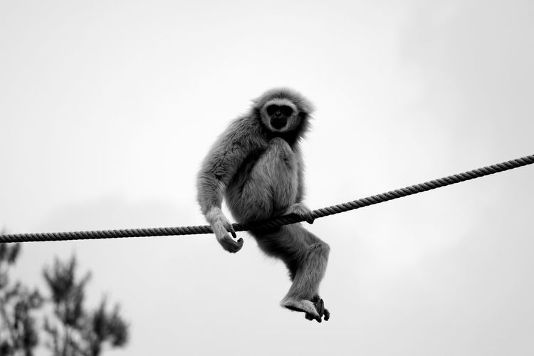 Animal Photography Animal Themes Animal_collection Animals Black & White Black And White Blackandwhite Blackandwhite Photography Bnw Eye4photography  EyeEm Best Shots EyeEmBestPics From My Point Of View Minimal Minimalism Minimalobsession Monkey Play Time