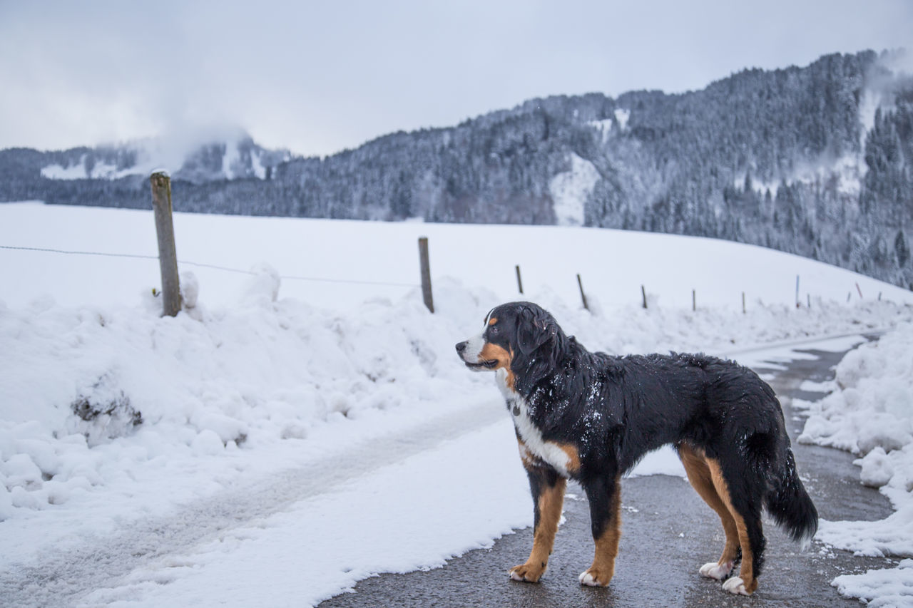 DOG ON SNOW COVERED MOUNTAIN