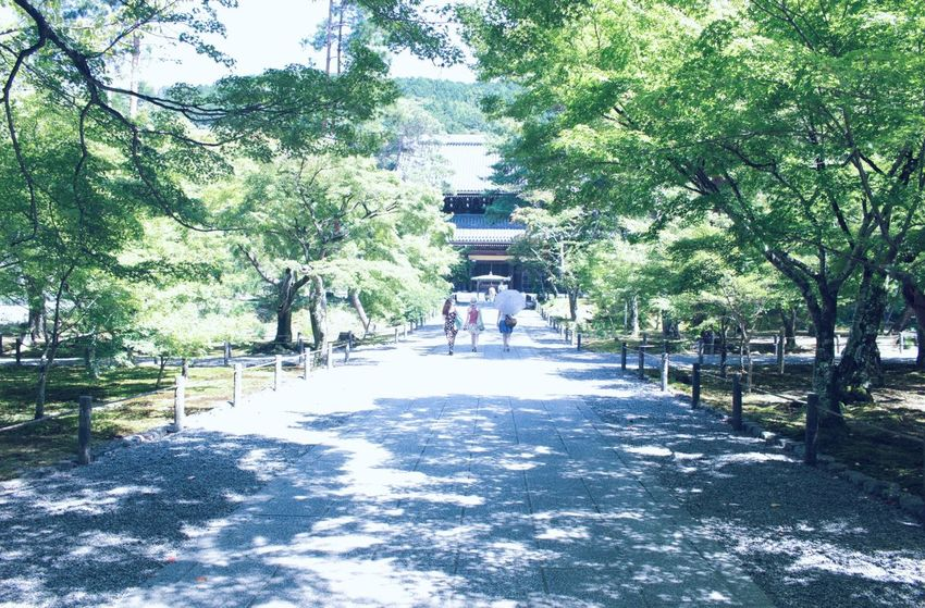 Japan Photography Tree Park - Man Made Space The Way Forward Tranquil Scene Growth Tranquility Nature Day Diminishing Perspective Footpath Solitude Scenics Walkway Branch Beauty In Nature Outdoors Park Green Color Remote Narrow Hello World