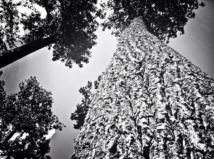 Straight Up Hugging A Tree Monochrome