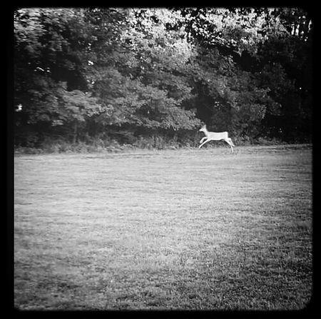 very friendly deer til my singing scared him away :)