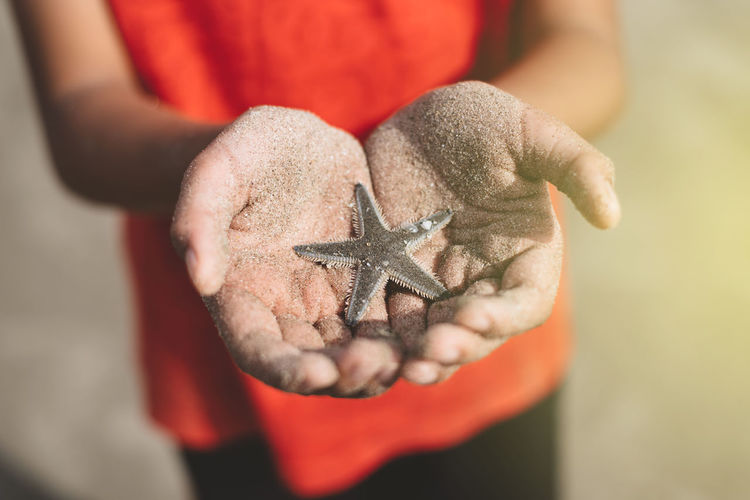 Midsection of person holding dead starfish at beach