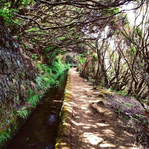 Levada walk, Madeira Madeira Madeira Island Levada Levada Walk Water Course Trees Shade