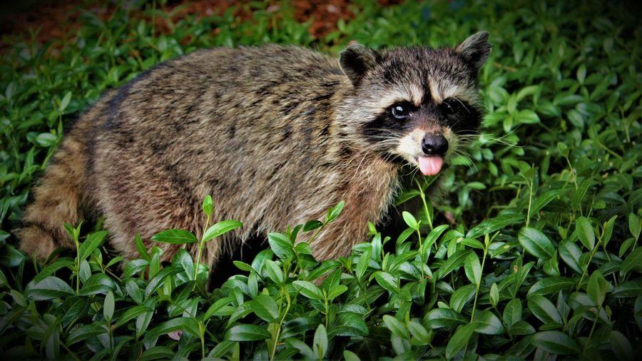 Portrait of an animal