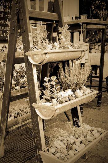Ladder Outdoors Vintage Gutter Old Looks Good Flowers Pine Cones EyeEm Best Shots EyeEm Gallery EyeEm Selects EyeEmBestPics Eyeem Vintage Collection No People Day Close-up