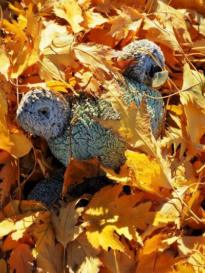 Full Frame Backgrounds Day No People Close-up Animal Themes Textured  Animals In The Wild Nature Outdoors Fragility Burried In Leaves Toy Fall Fall Beauty