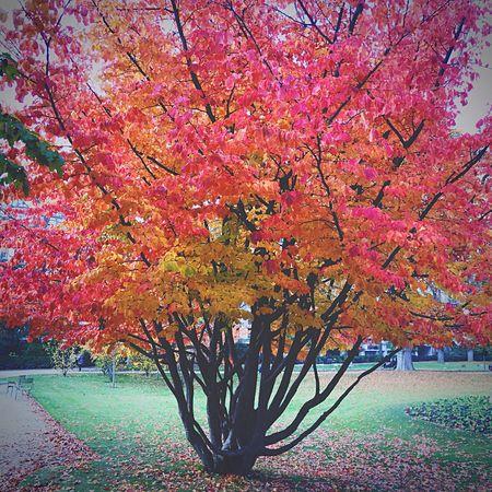 EyeEm Nature Lover Autumn Colors Autumn Nature Trees Paris Jardin Du Luxembourg