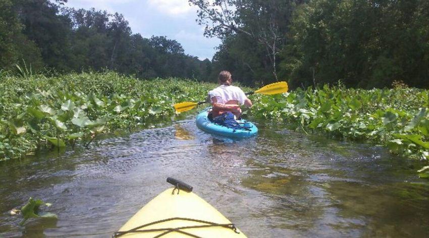 The Action Photographer - 2015 EyeEm Awards KayakKayaking Wekiva River Apopka Florida Beautiful Dangerous