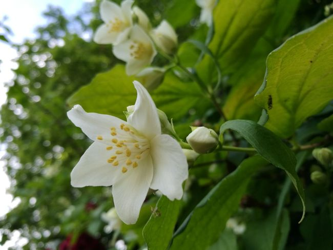 Flower Nature Close-up Blossom Plant Petal Fragility Beauty In Nature Day No People Flower Head Growth Leaf Outdoors Freshness Springtime