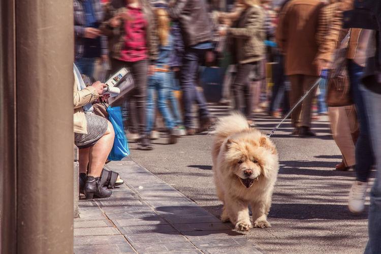 City City Life Day Dog Dog Love Dog Walking Lifestyles Outdoors Pets