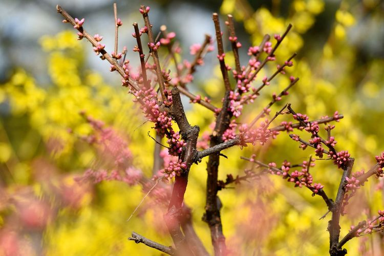 Close-up of tree in bloom
