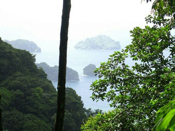 Trinidad And Tobago Rainforest Jungle Island Island Life