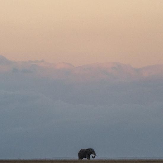 Africa Elephant Africa African Safari Animal Canine Domestic Animals Mammal Nature No People One Animal Scenics - Nature Sky Sunset