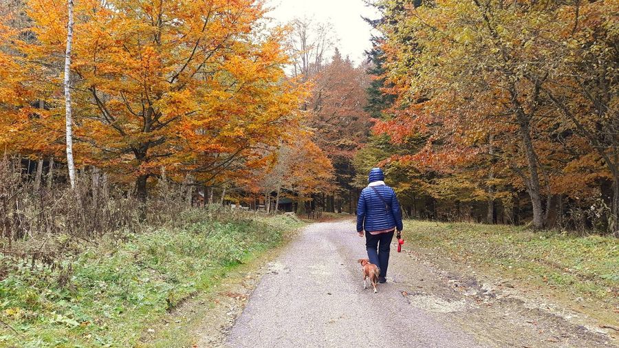 Rear view of man walking on footpath during autumn
