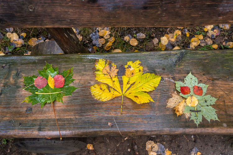 High angle view of yellow maple leaves on wood