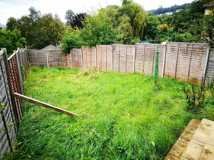 Green Color Growth Grass Day Outdoors No People Tree Sunlight Nature Overgrown Garden Run Down Garden Tired Garden Fence Beauty In Nature Sky Old Garden Fence Long Grass Overgrown Lawn Neglected Lawn Unmowed Lawn