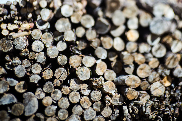 Abundance Backgrounds Close-up Deforestation Firewood Forest Fuel And Power Generation Full Frame Large Group Of Objects Log Lumber Industry Nature No People Pattern Stack Textured  Timber Tree Wood Wood - Material Woodpile