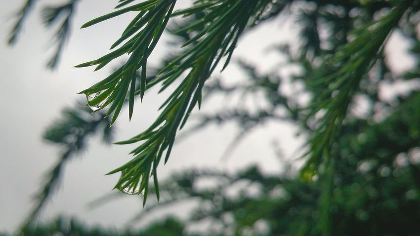 Maximum Closeness Rain Drops Rain Droplets A Bird's Eye View Rain Drops On Leaves Water Drops Branches Water Dropping After The Rain After The Rains After The Rain Stopped Focus On Foreground Close To Nature Nature Green Green Nature Raindrops Rainy Day Green Color Palette
