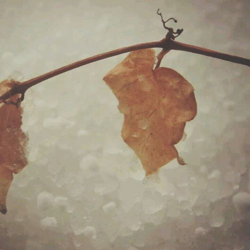 Cold Winter ❄⛄ Winter Leaves Snoww Trees #leaves